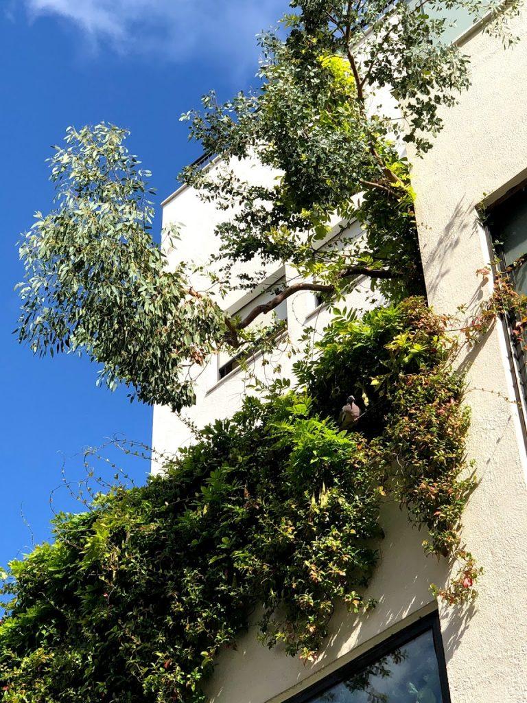 les arbres dans mon jardin-madameCrobalo