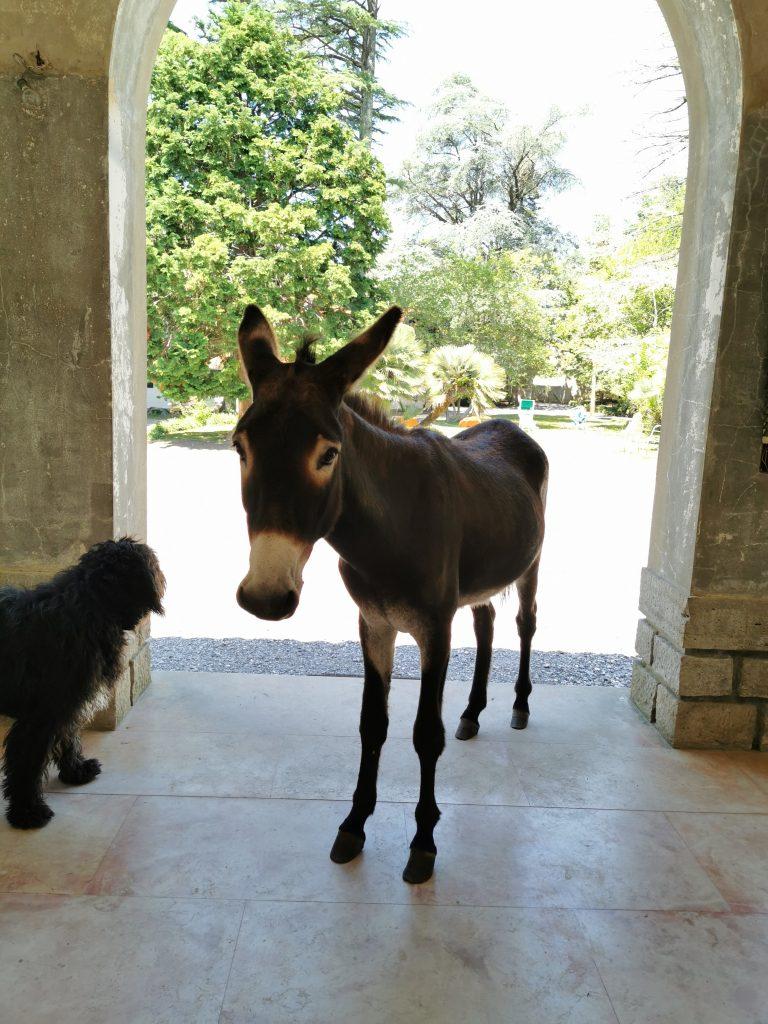 Villa Magnan le paradis de l'âne Hector