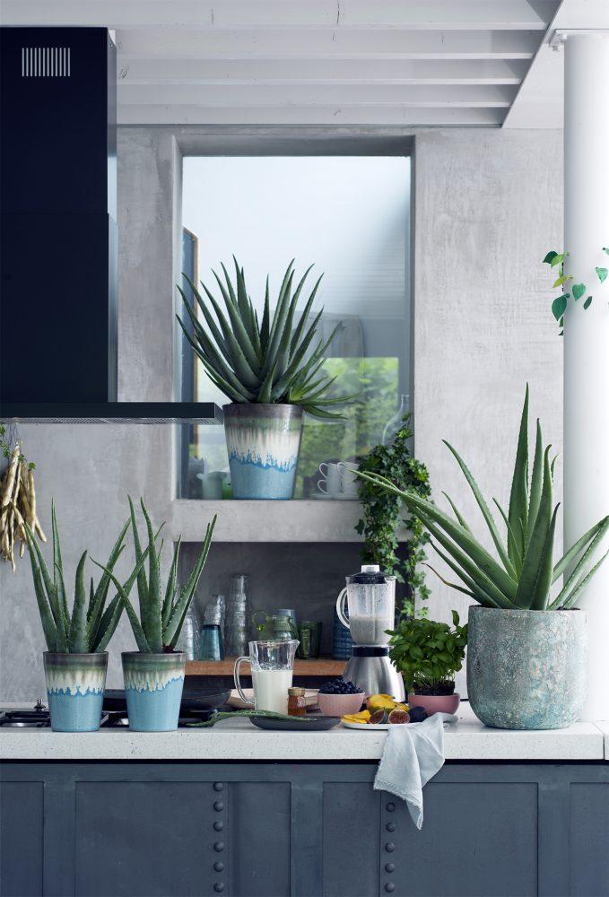 plante increvable Aloe Vera @maplantemonbonheur @madamecrobalo